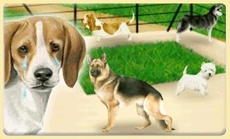 Die Hunde, die aufgegeben wurden
