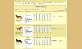 Dogzer - Einen hund per auktion kaufen und andere moglichkeiten